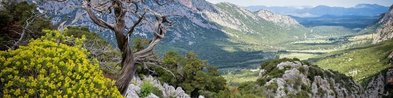 Sardinia: European Forest Island Award