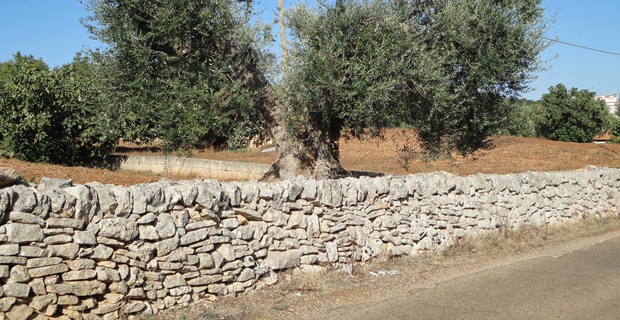 A world's heritage: dry-stone walls